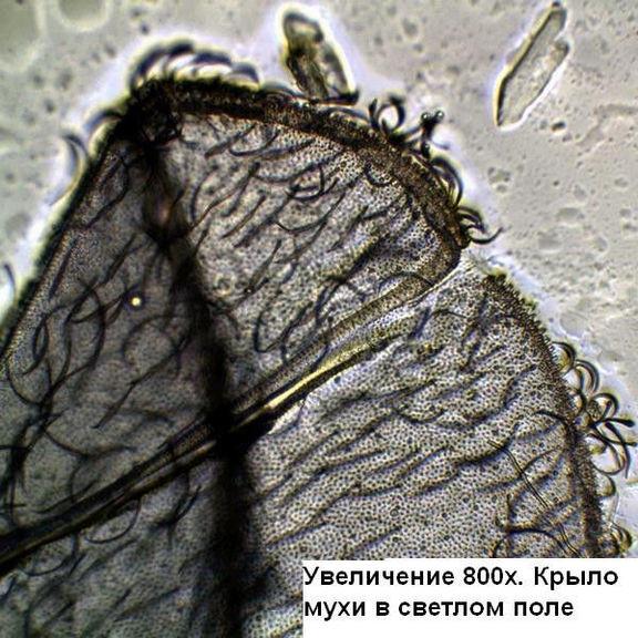 Микроскоп Optika B-352PL 40x-1600x Bino